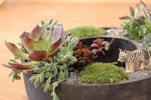 夢がもりもり、植物もりもり♪